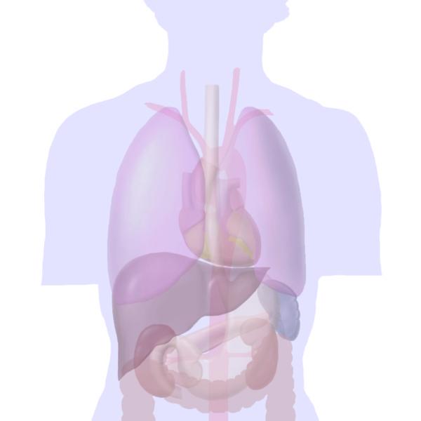 患者さんへの説明用 人体イラスト