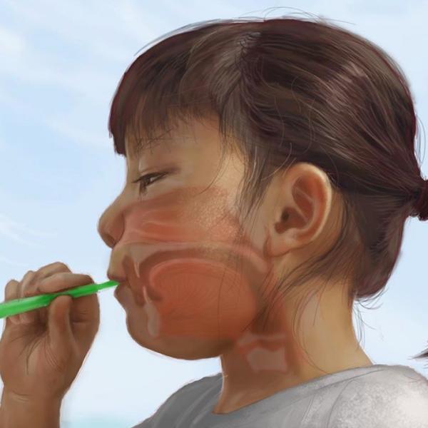 鼻腔・喉頭・咽頭の構造 The structure of nasal cavity, pharynx & Larynx