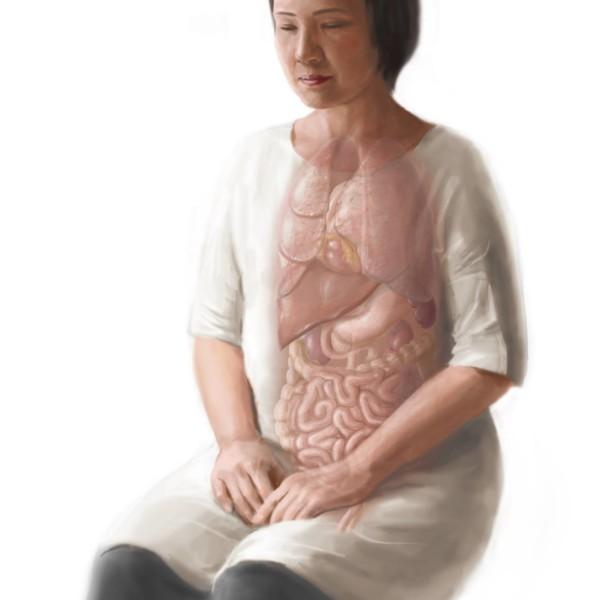 胸腹部の臓器イラスト The chest & abdominal organs illustration